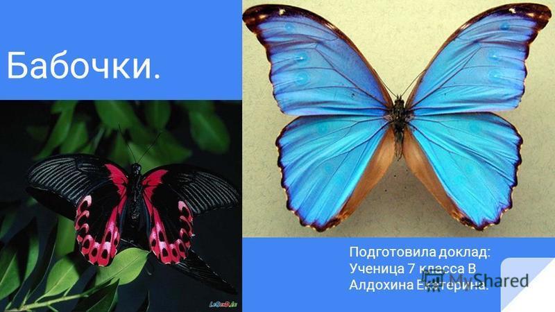 Бабочки. Подготовила доклад: Ученица 7 класса В Алдохина Екатерина.