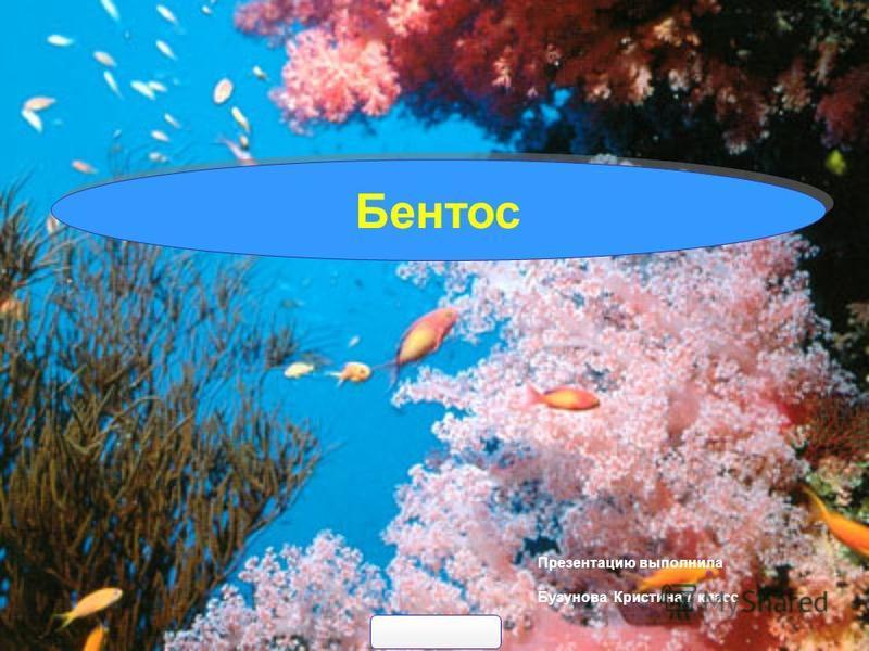 Презентацию выполнила Бузунова Кристина 7 класс Бентос