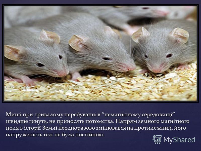 Миші при тривалому перебуванні в немагнітному середовищі швидше гинуть, не приносять потомства. Напрям земного магнітного поля в історії Землі неодноразово змінювався на протилежний, його напруженість теж не була постійною.
