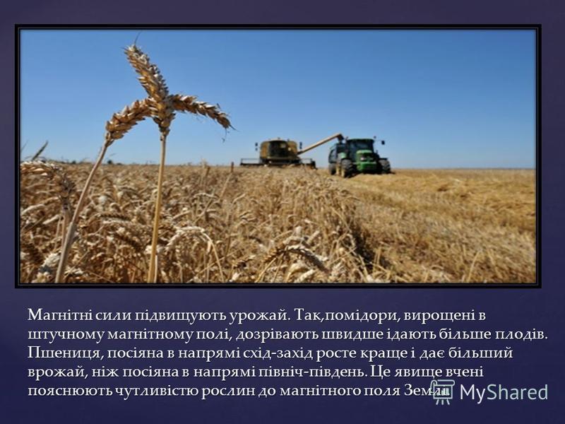 Магнітні сили підвищують урожай. Так,помідори, вирощені в штучному магнітному полі, дозрівають швидше ідають більше плодів. Пшениця, посіяна в напрямі схід-захід росте краще і дає більший врожай, ніж посіяна в напрямі північ-південь. Це явище вчені п