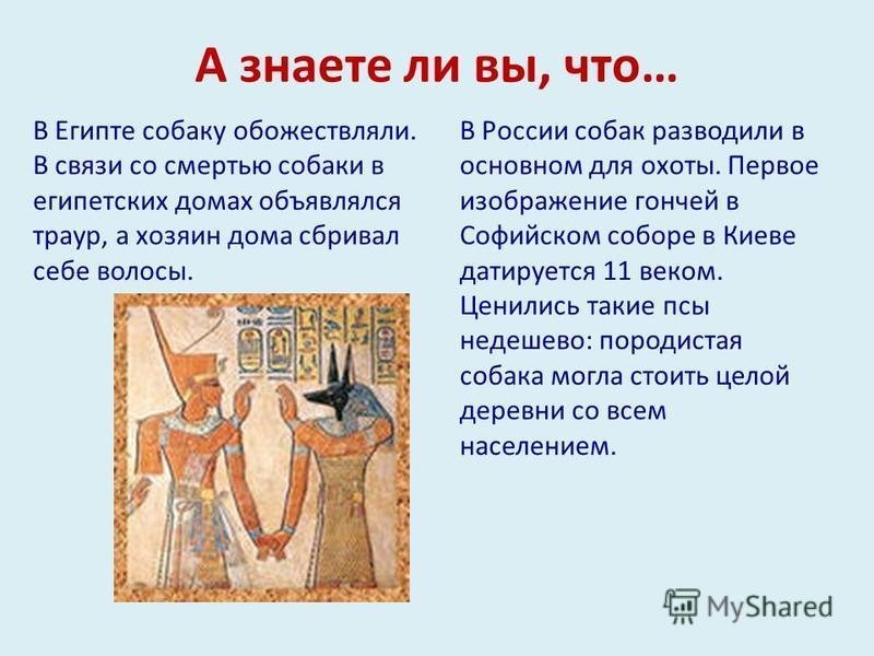 А знаете ли вы, что… В Египте собаку обожествляли. В связи со смертью собаки в египетских домах объявлялся траур, а хозяин дома сбривал себе волосы. В России собак разводили в основном для охоты. Первое изображение гончей в Софийском соборе в Киеве д