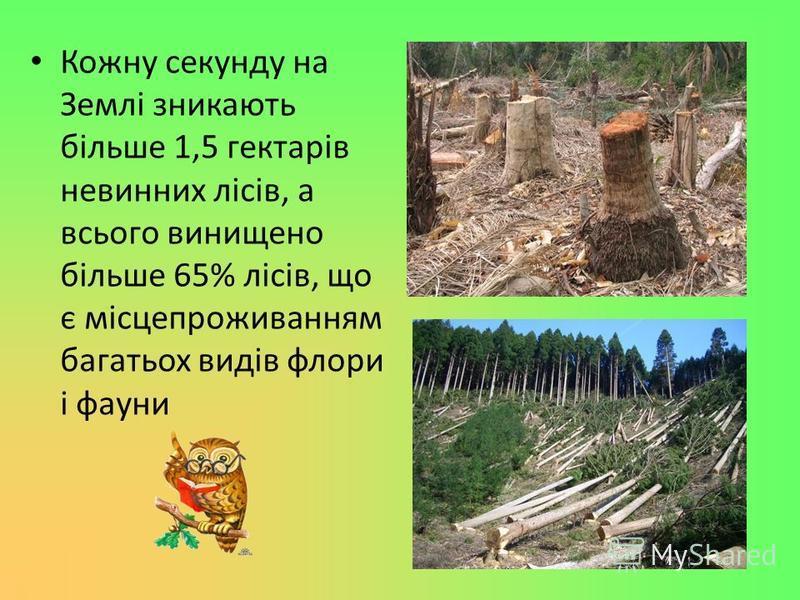 Кожну секунду на Землі зникають більше 1,5 гектарів невинних лісів, а всього винищено більше 65% лісів, що є місцепроживанням багатьох видів флори і фауни