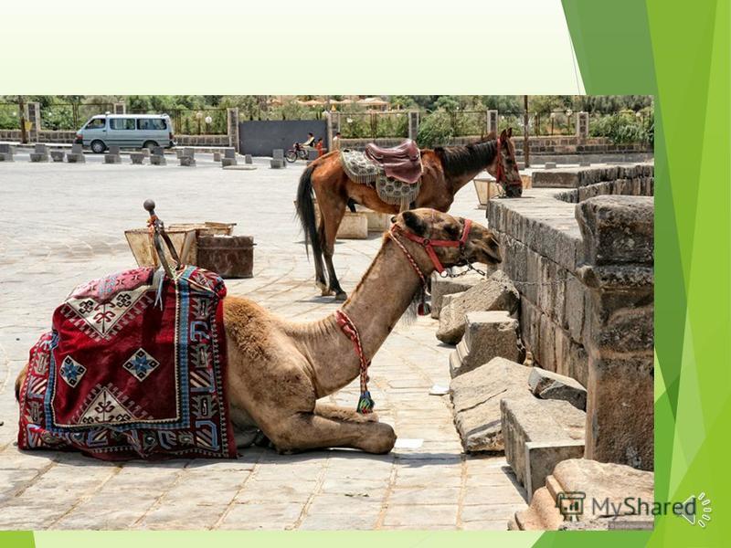 Пальмира Пальмира Без сомнения, Пальмира это достопримечательность Сирии номер один. Величественные руины этого древнего города караваном вытягиваются на многие километры сирийской земли, опираясь на пышные оазисы из зеленых пальм и здания современно