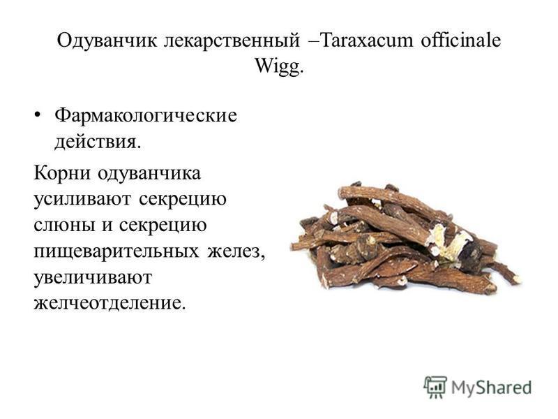 Одуванчик лекарственный –Taraxacum officinale Wigg. Фармакологические действия. Корни одуванчика усиливают секрецию слюны и секрецию пищеварительных желез, увеличивают желчеотделение.