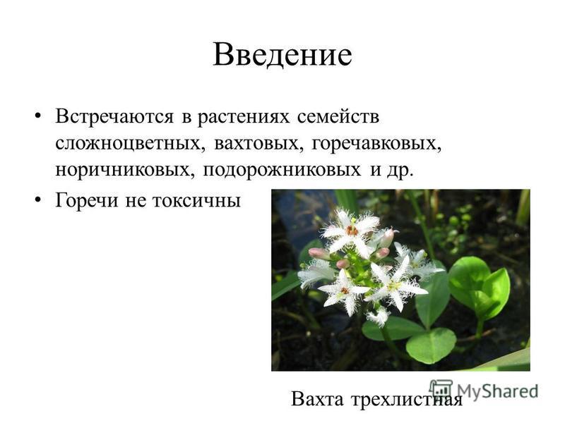 Введение Встречаются в растениях семейств сложноцветных, вахтовых, горечавковых, норичниковых, подорожниковых и др. Горечи не токсичны Вахта трехлистная