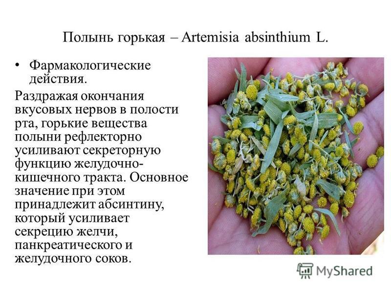 Полынь горькая – Artemisia absinthium L. Фармакологические действия. Раздражая окончания вкусовых нервов в полости рта, горькие вещества полыни рефлекторно усиливают секреторную функцию желудочно- кишечного тракта. Основное значение при этом принадле