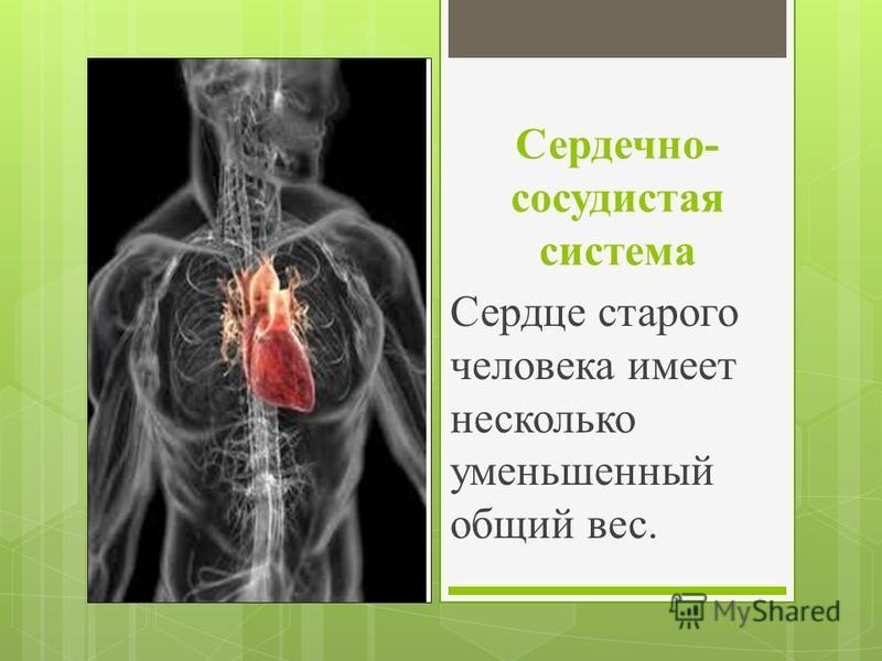 Сердечно- сосудистая система Сердце старого человека имеет несколько уменьшенный общий вес.