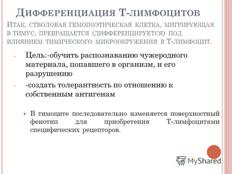 И ТАК, СТВОЛОВАЯ ГЕМОПОЭТИЧЕСКАЯ КЛЕТКА, МИГРИРУЮЩАЯ В ТИМУС, ПРЕВРАЩАЕТСЯ ( ДИФФЕРЕНЦИРУЕТСЯ ) ПОД ВЛИЯНИЕМ ТИМИЧЕСКОГО МИКРООКРУЖЕНИЯ В Т- ЛИМФОЦИТ. - Цель:-обучить распознаванию чужеродного материала, попавшего в организм, и его разрушению - -созд