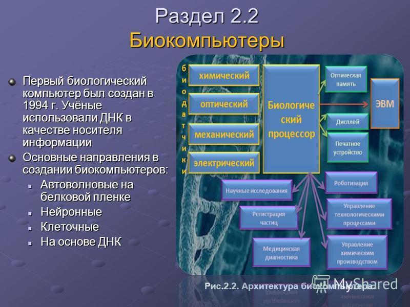 Раздел 2.2 Биокомпьютеры Первый биологический компьютер был создан в 1994 г. Учёные использовали ДНК в качестве носителя информации Основные направления в создании био компьютеров: Автоволновые на белковой пленке Автоволновые на белковой пленке Нейро