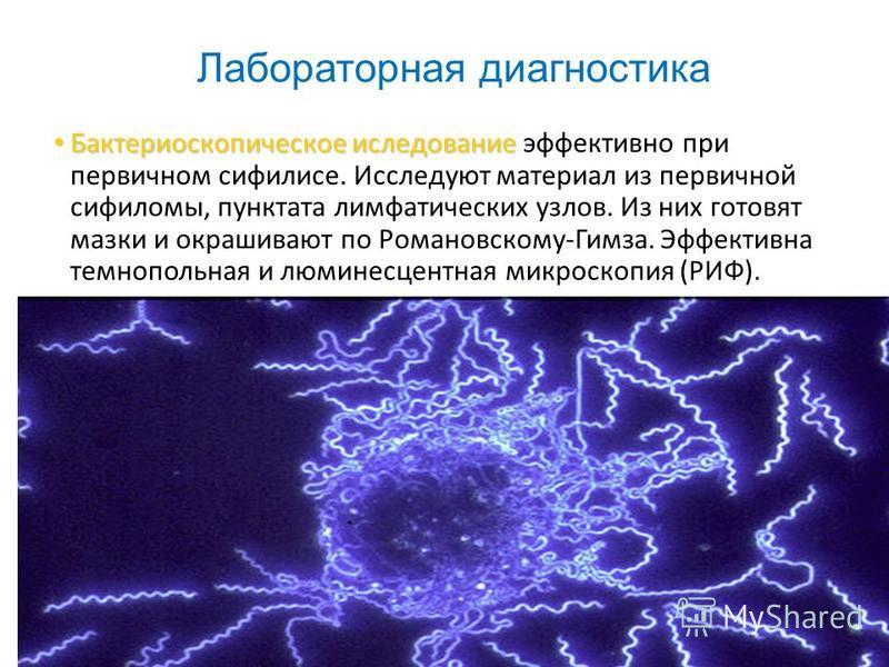Лабораторная диагностика Бактериоскопическое исследование Бактериоскопическое исследование эффективно при первичном сифилисе. Исследуют материал из первичной сифиломы, пунктата лимфатических узлов. Из них готовят мазки и окрашивают по Романовскому-Ги