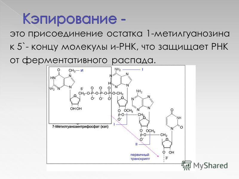 это присоединение остатка 1-метилгуанозина к 5`- концу молекулы и-РНК, что защищает РНК от ферментативного распада.