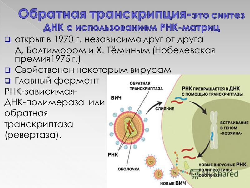 открыт в 1970 г. независимо друг от друга Д. Балтимором и Х. Тёминым (Нобелевская премия 1975 г.) Свойственен некоторым вирусам Главный фермент РНК-зависимая- ДНК-полимераза или обратная транскриптаза (ревертаза).