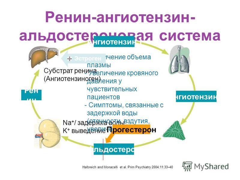 Ренин-ангиотензин- альдостероновая система Ангиотензин II Ангиотензин I Рен ин Na + / задержка воды K + выведение Субстрат ренина (Ангиотензиноген) - Увеличение объема плазмы - Увеличение кровяного давления у чувствительных пациентов - Симптомы, связ