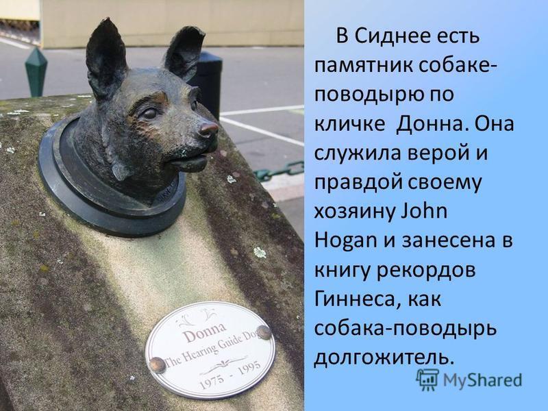 В Сиднее есть памятник собаке- поводырю по кличке Донна. Она служила верой и правдой своему хозяину John Hogan и занесена в книгу рекордов Гиннеса, как собака-поводырь долгожитель.