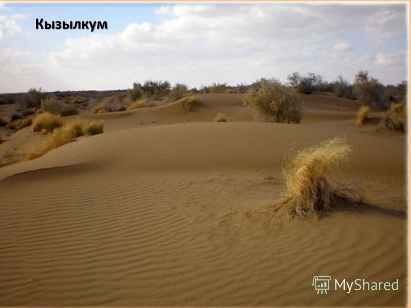 Приаральские Каракумы Равнина с песчано-холмистым рельефом. Древняя, измененная под воздействием ветра. Пески Улькен и Киши Борсык Песчаная равнина с отложениями неогена. Присырдарьинская равнина Песчано-глинистая пустыня с уклоном к Аральскому морю.