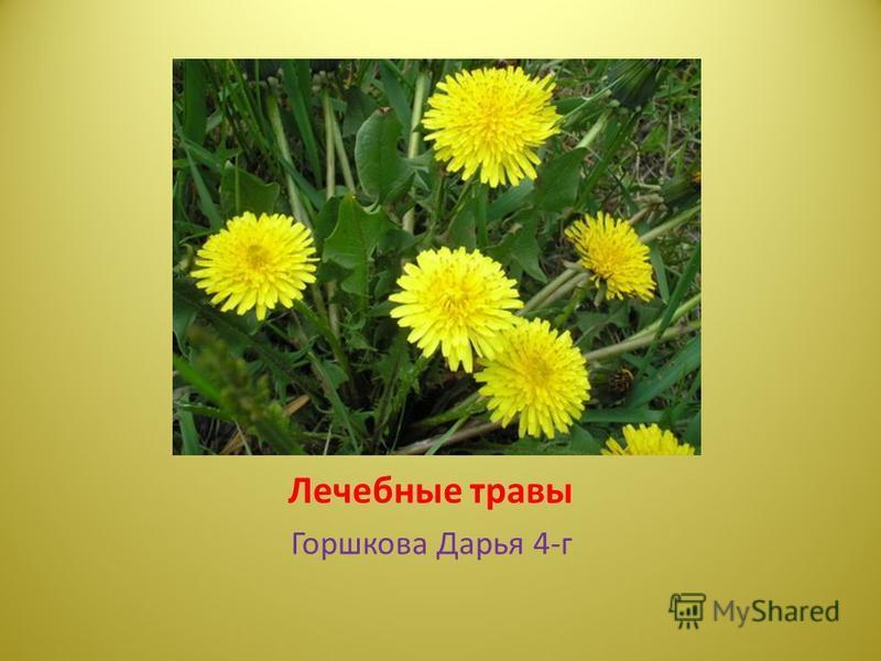Лечебные травы Горшкова Дарья 4-г