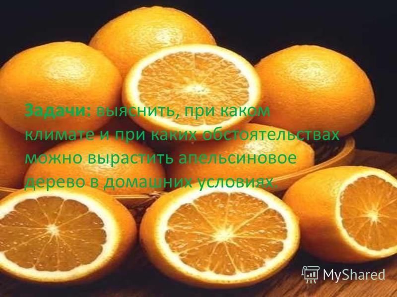 Задачи: выяснить, при каком климате и при каких обстоятельствах можно вырастить апельсиновое дерево в домашних условиях.