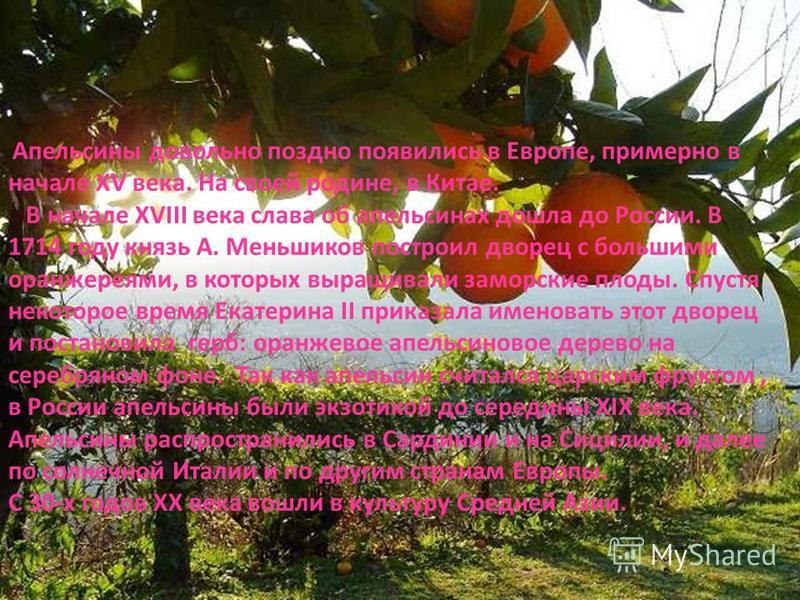 Апельсины довольно поздно появились в Европе, примерно в начале XV века. На своей родине, в Китае. В начале ХVIII века слава об апельсинах дошла до России. В 1714 году князь А. Меньшиков построил дворец с большими оранжереями, в которых выращивали за