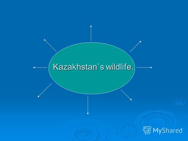 Kazakhstan`s wildlife. Kazakhstan`s wildlife.