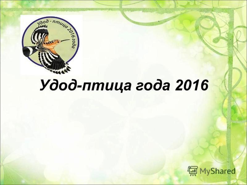 Удод-птица года 2016