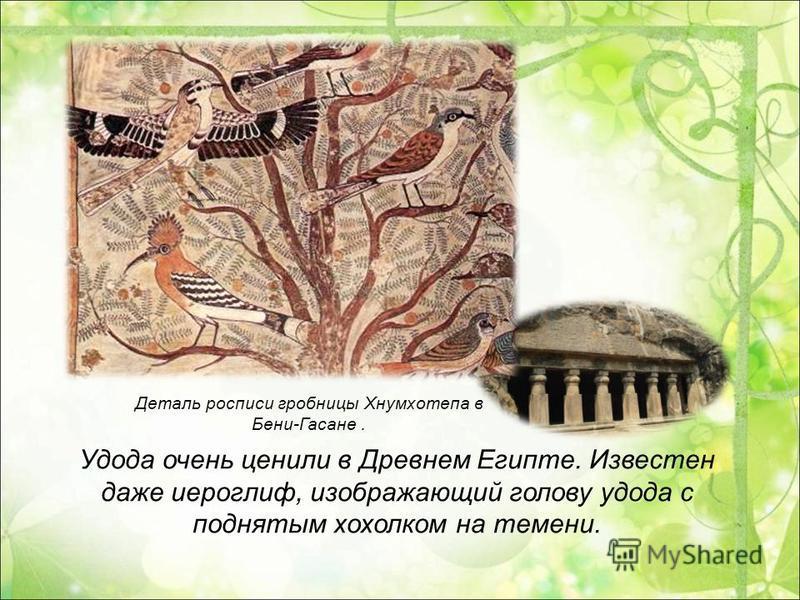 Деталь росписи гробницы Хнумхотепа в Бени-Гасане. Удода очень ценили в Древнем Египте. Известен даже иероглиф, изображающий голову удода с поднятым хохолком на темени.
