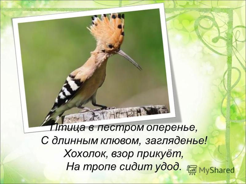 Птица в пестром оперенье, С длинным клювом, загляденье! Хохолок, взор прикуёт, На тропе сидит удод.