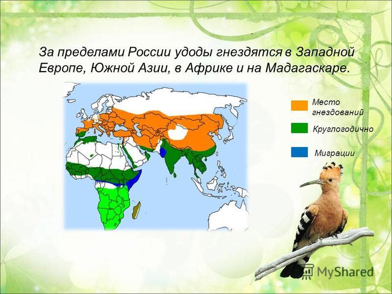 За пределами России удоды гнездятся в Западной Европе, Южной Азии, в Африке и на Мадагаскаре. Место гнездований Круглогодично Миграции