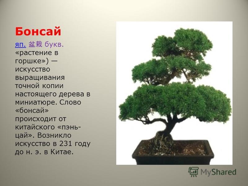 Бонсай яп.яп. букв. «растение в горшке») искусство выращивания точной копии настоящего дерева в миниатюре. Слово «бонсай» происходит от китайского «пень- цой». Возникло искусство в 231 году до н. э. в Китае.