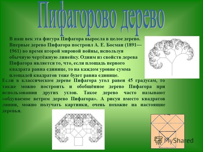 В наш век эта фигура Пифагора выросла в целое дерево. Впервые дерево Пифагора построил А. Е. Босман (1891 1961) во время второй мировой войны, используя обычную чертёжную линейку. Одним из свойств дерева Пифагора является то, что, если площадь первог