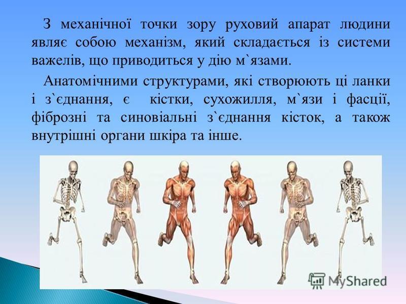 З механічної точки зору руховий апарат людини являє собою механізм, який складається із системи важелів, що приводиться у дію м`язами. Анатомічними структурами, які створюють ці ланки і з`єднання, є кістки, сухожилля, м`язи і фасції, фіброзні та сино