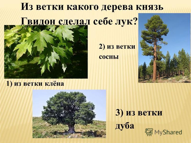 Из ветки какого дерева князь Гвидон сделал себе лук? 1) из ветки клёна 2) из ветки сосны 3) из ветки дуба
