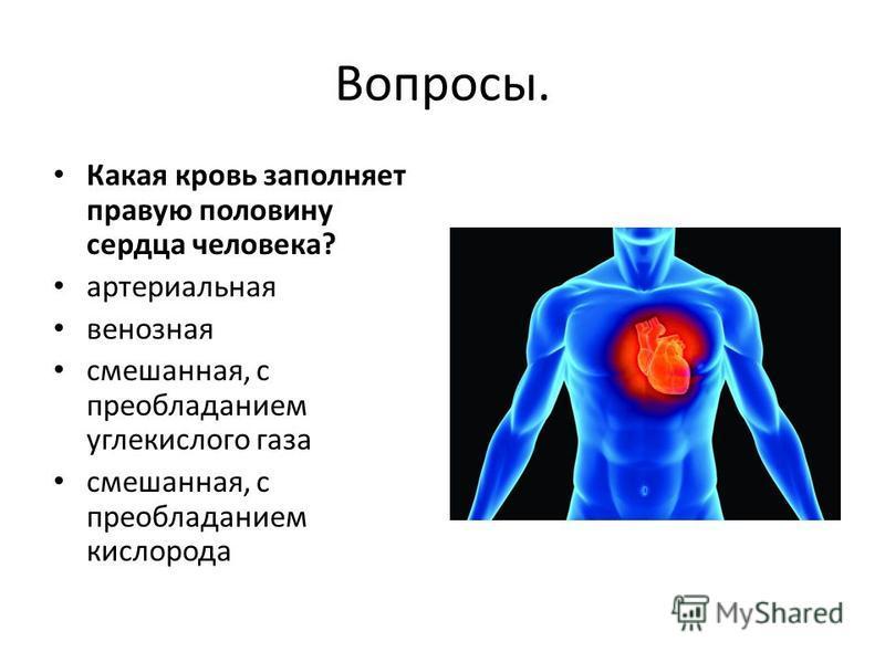 Вопросы. Какая кровь заполняет правую половину сердца человека? артериальная венозная смешанная, с преобладанием углекислого газа смешанная, с преобладанием кислорода