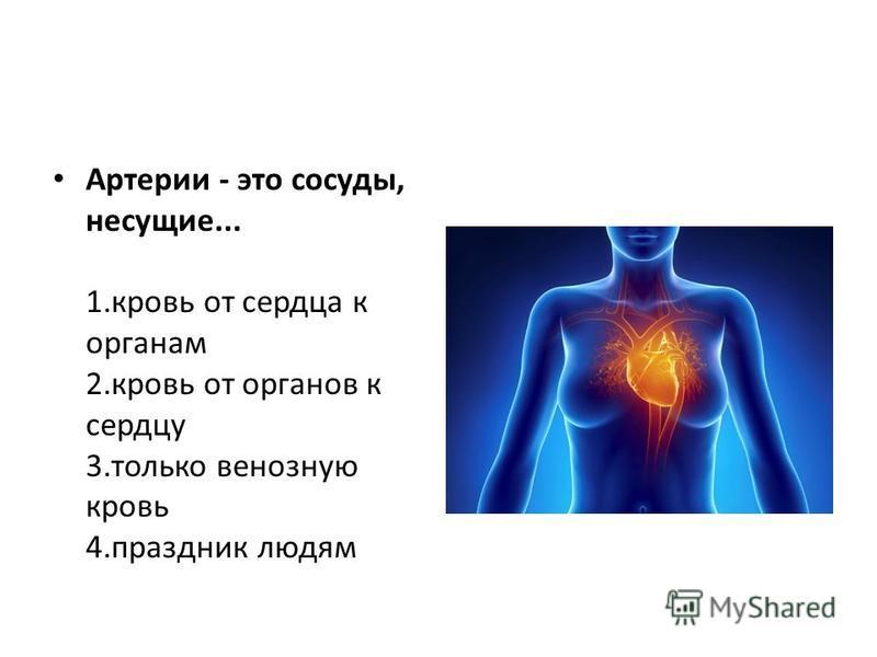 Артерии - это сосуды, несущие... 1. кровь от сердца к органам 2. кровь от органов к сердцу 3. только венозную кровь 4. праздник людям