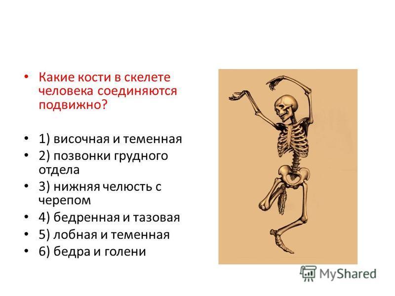 Какие кости в скелете человека соединяются подвижно? 1) височная и теменная 2) позвонки грудного отдела 3) нижняя челюсть с черепом 4) бедренная и тазовая 5) лобная и теменная 6) бедра и голени