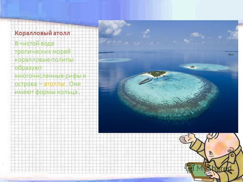 Коралловый атолл В чистой воде тропических морей коралловые полипы образуют многочисленные рифы и острова – атоллы. Они имеют формы кольца.