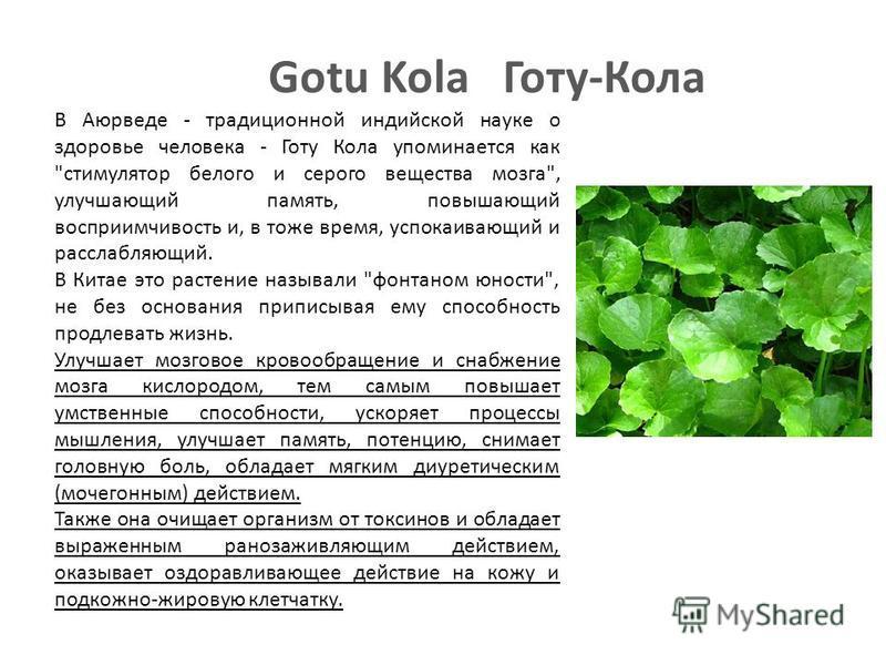 Gotu Kola Готу-Кола В Аюрведе - традиционной индийской науке о здоровье человека - Готу Кола упоминается как