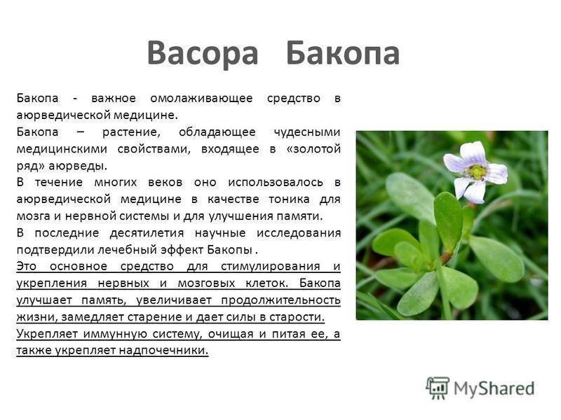 Bacopa Бакопа Бакопа - важное омолаживающее средство в аюрведической медицине. Бакопа – растение, обладающее чудесными медицинскими свойствами, входящее в «золотой ряд» аюрведы. В течение многих веков оно использовалось в аюрведической медицине в кач