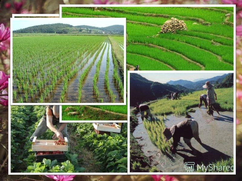 Ключевые направления южнокорейской экономики за шестидесятилетнюю историю существования государства сильно изменились. В 1940-х годах экономика страны опиралась преимущественно на сельское хозяйство и лёгкую промышленность.