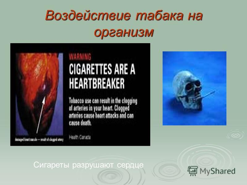 Воздействие табака на организм Сигареты разрушают сердце