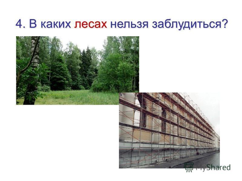 4. В каких лесах нельзя заблудиться?