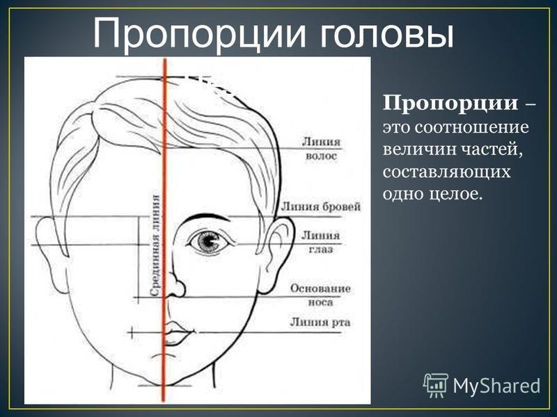 Пропорции головы человека Пропорции – это соотношение величин частей, составляющих одно целое.