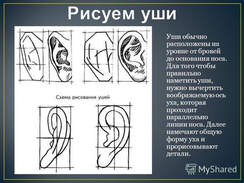Уши обычно расположены на уровне от бровей до основания носа. Для того чтобы правильно наметить уши, нужно вычертить воображаемую ось уха, которая проходит параллельно линии носа. Далее намечают общую форму уха и прорисовывают детали.