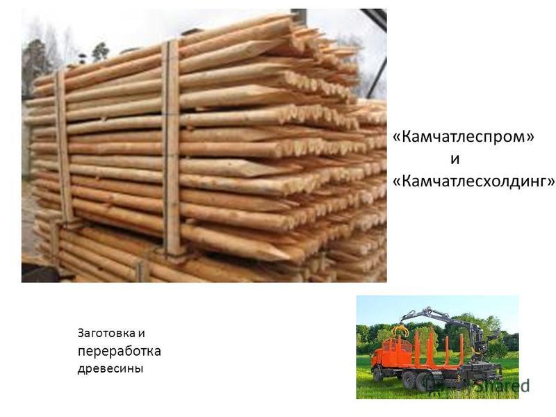 «Камчатлеспром» и «Камчатлесхолдинг» Заготовка и переработка древесины
