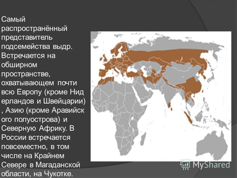 Самый распространённый представитель подсемейства выдр. Встречается на обширном пространстве, охватывающем почти всю Европу (кроме Нид ерландов и Швейцарии), Азию (кроме Аравийск ого полуострова) и Северную Африку. В России встречается повсеместно, в