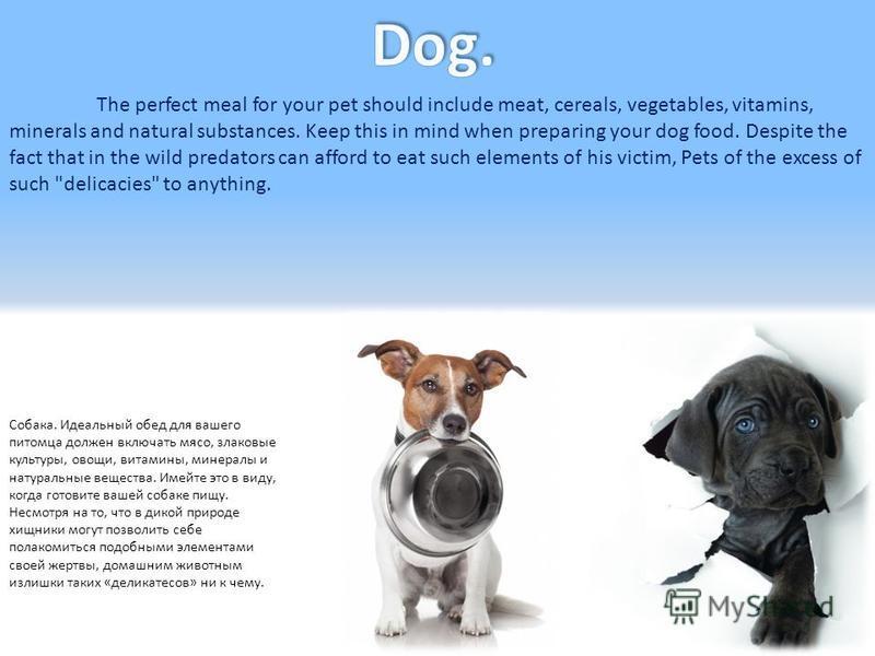 Собака. Идеальный обед для вашего питомца должен включать мясо, злаковые культуры, овощи, витамины, минералы и натуральные вещества. Имейте это в виду, когда готовите вашей собаке пищу. Несмотря на то, что в дикой природе хищники могут позволить себе