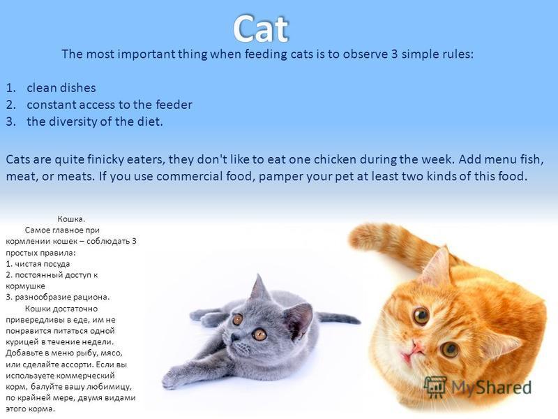Кошка. Самое главное при кормлении кошек – соблюдать 3 простых правила: 1. чистая посуда 2. постоянный доступ к кормушке 3. разнообразие рациона. Кошки достаточно привередливы в еде, им не понравится питаться одной курицей в течение недели. Добавьте