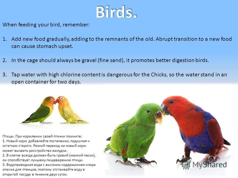 Птицы. При кормлении своей птички помните: 1. Новый корм добавляйте постепенно, подсыпая к остаткам старого. Резкий переход на новый корм может вызвать расстройство желудка. 2. В клетке всегда должен быть гравий (мелкий песок), он способствует лучшем
