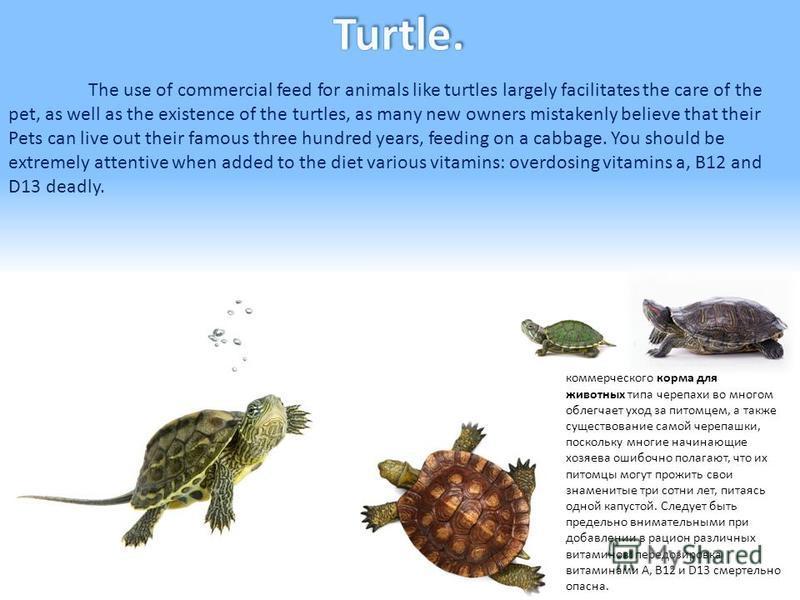 Черепаха. Использование коммерческого корма для животных типа черепахи во многом облегчает уход за питомцем, а также существование самой черепашки, поскольку многие начинающие хозяева ошибочно полагают, что их питомцы могут прожить свои знаменитые тр