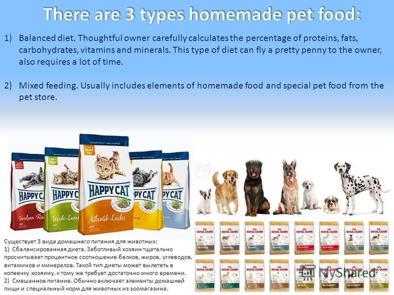 Существует 3 вида домашнего питания для животных: 1) Сбалансированная диета. Заботливый хозяин тщательно просчитывает процентное соотношение белков, жиров, углеводов, витаминов и минералов. Такой тип диеты может вылететь в копеечку хозяину, к тому же