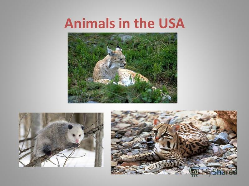Animals in the USA